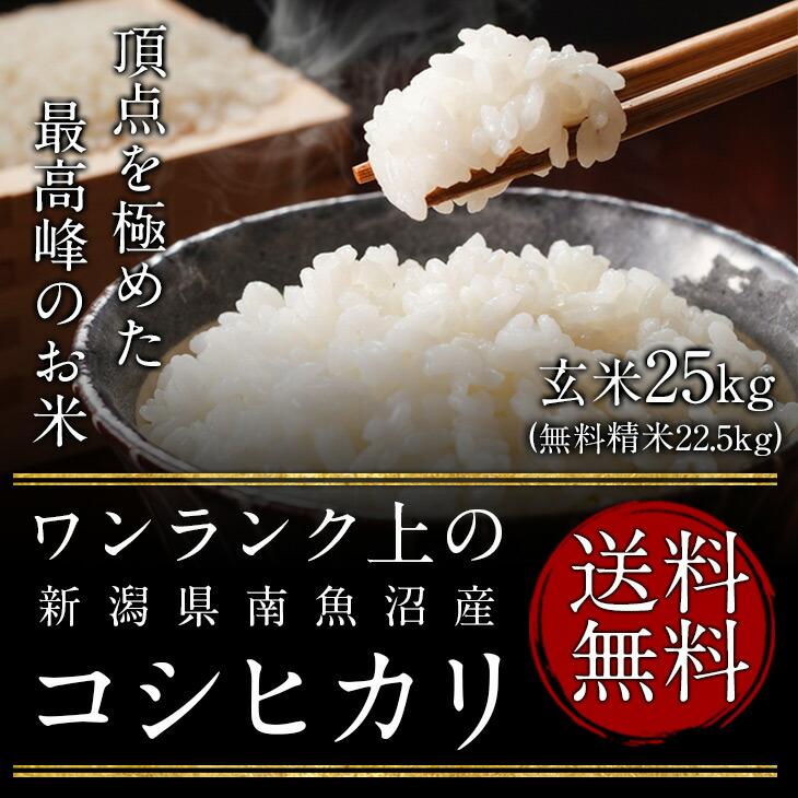 地元埼玉県産ヒカリ新世紀(農家直米)