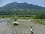 JAS有機米筑波山のふもとで伸び伸び育て