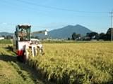 JAS有機米有機栽培の田んぼには生き物が多い