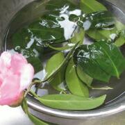 道明寺粉の椿餅 葉を洗う