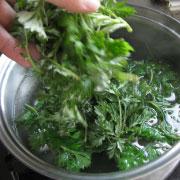 ヨモギを茹でる 鍋に湯を沸かしてヨモギを入れる