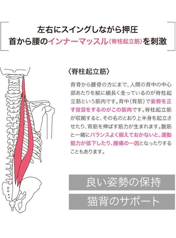 左右にスイングしながら押圧 首から腰のインナーマッスル、脊柱起立筋を刺激。脊柱起立筋の説明。