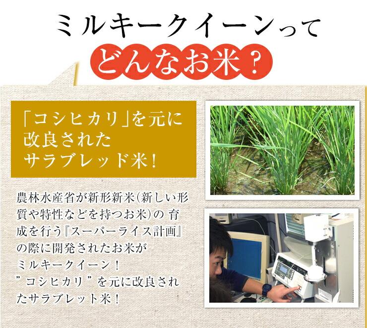 クイーン 特性 ミルキー 【ミルキークイーン】とは?お米の特徴や人気の産地・美味しさの秘訣