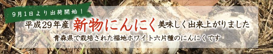 9月1日より出荷開始!平成29年産新物にんにく、美味しく出来上がりました。青森県で栽培された福地ホワイト六片種のにんにくです。