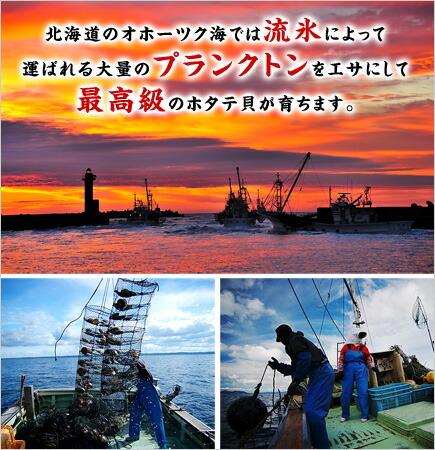 北海道オホーツク海の一級品!【特大】生ほたて貝柱1kg(約20粒入り)送料無料【帆立】【ホタテ】【ほたて】【刺身】
