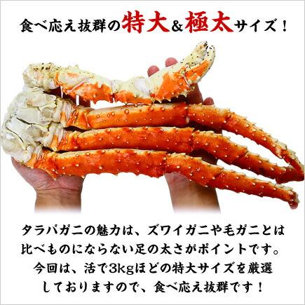 特大&極太たらばがに足1kg前後×1肩シュリンク包装【タラバガニ】【たらば蟹】【かに】