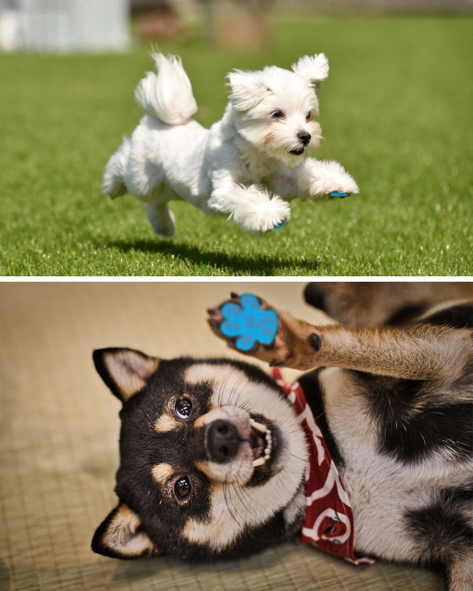 ペット 靴下 足裏 シール パット 犬 フローリング 滑り止め ペット用品