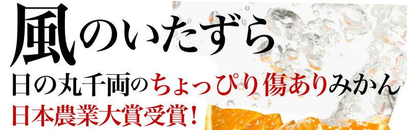 日の丸千両のちょっぴり傷ありみかん日本農業大賞受賞!