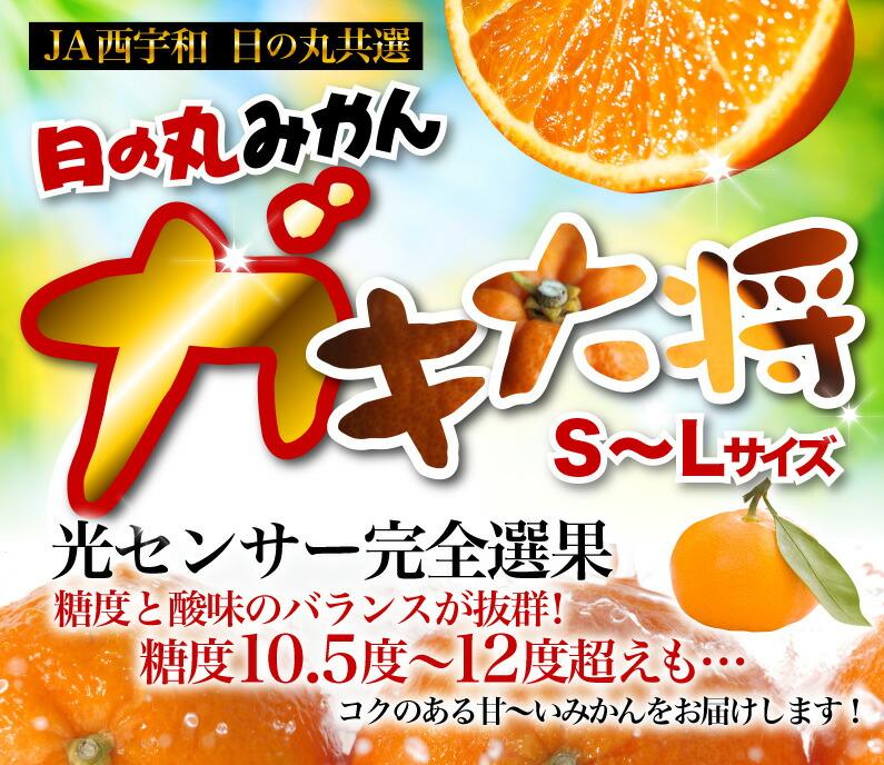 JA西宇和 日の丸共選 日の丸みかんガキ大将 糖度10.5度以上を保証!