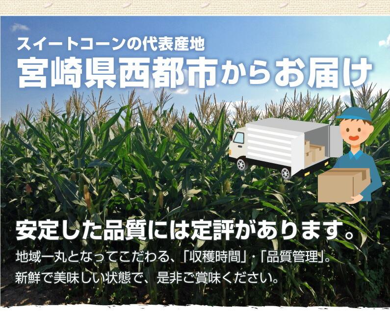スイートコーンの代表産地、宮崎県西都市からお届け