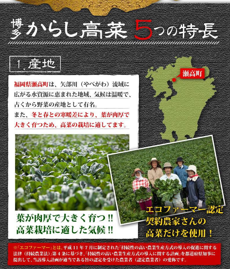 特長1:高菜の栽培に適した瀬高町、エコファーマー認定契約農家さんの高菜だけを使用!