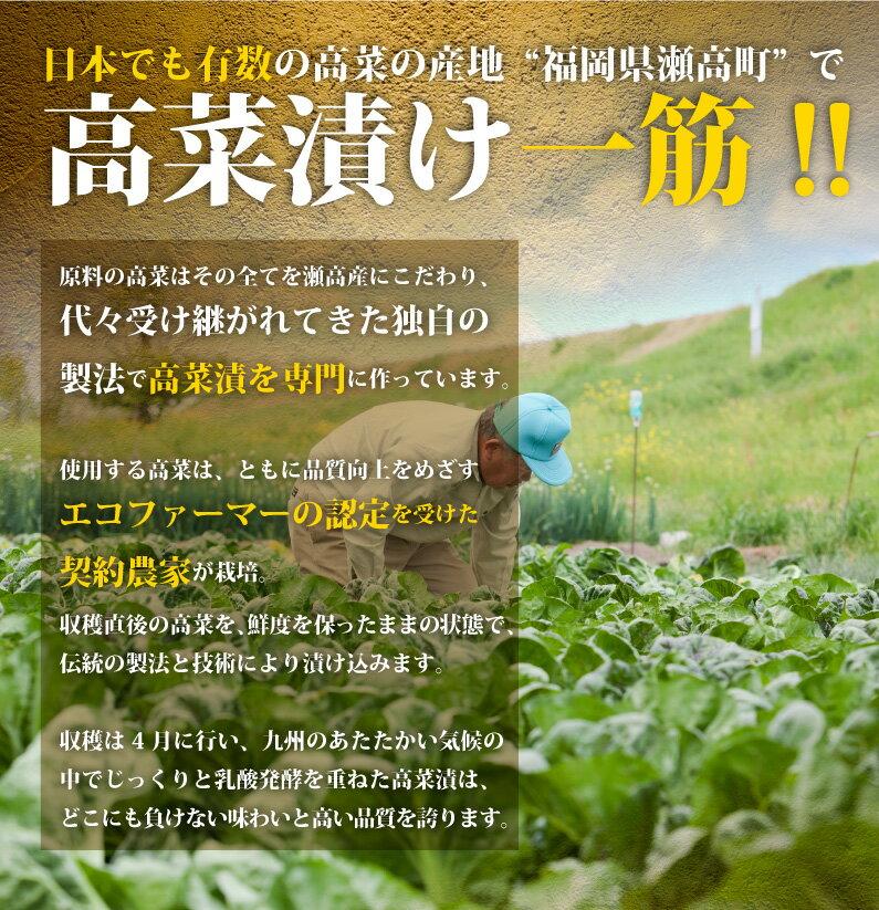 高菜漬け一筋!!瀬高町のエコファーマー認定の契約農家が栽培!