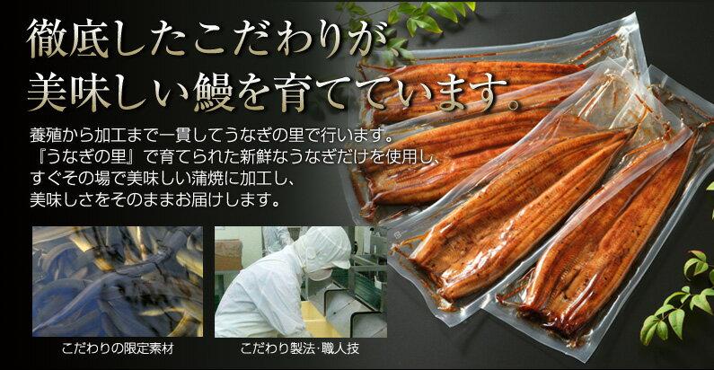 徹底したこだわりが美味しい鰻を育てています。