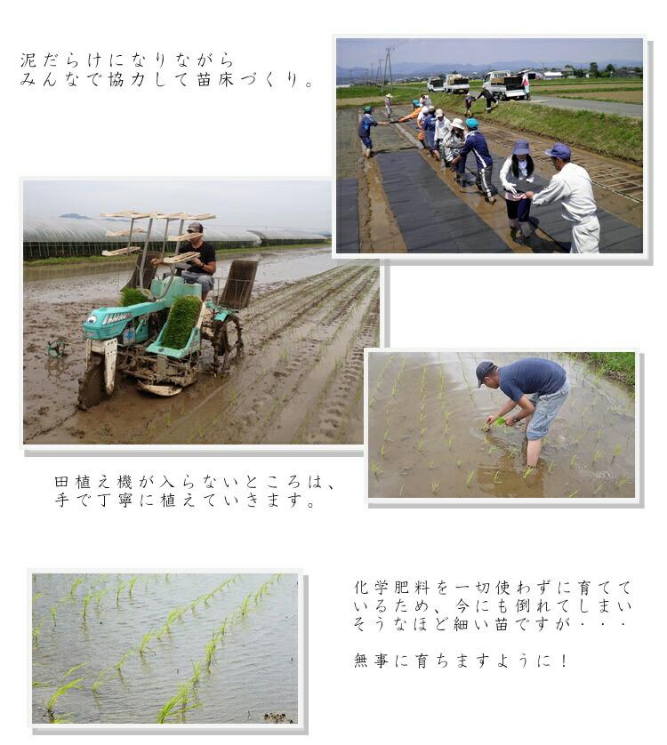 お米育成1