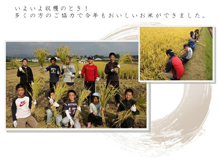 お米育成3