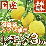 熊本産 減農薬 レモン 3kg