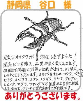 クワガタ カブトムシ イラスト画像