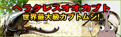 ヘラクレスオオカブトムシ