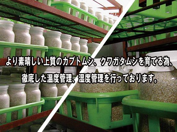 クワガタ天国の菌糸ビンシリーズ