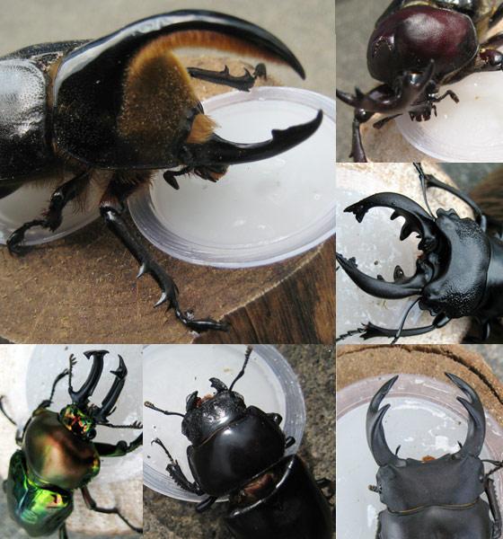 高品質・高たんぱく 昆虫ゼリー