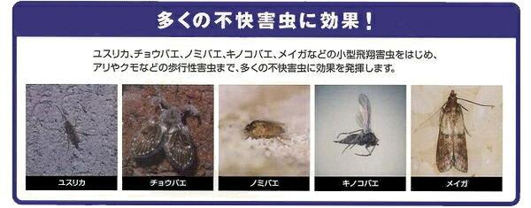 多くの不快害虫があります