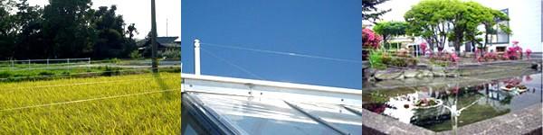 防鳥糸の使用例