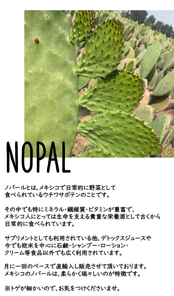 うちわサボテン ノパール nopal