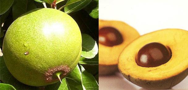 ペルー特産フルーツ「ルクマ」