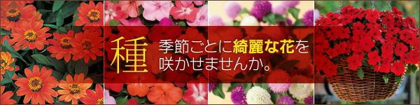 種 季節ごとに綺麗な花を咲かせませんか?