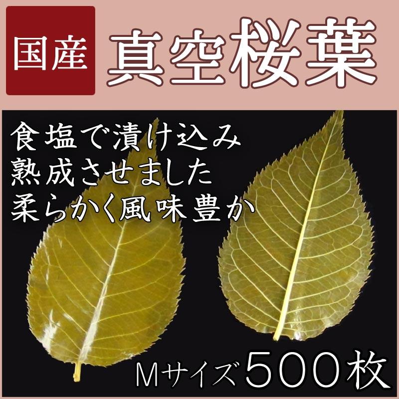 真空桜葉 500枚