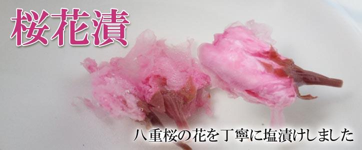 桜花漬 八重桜の花を丁寧に塩漬けしました