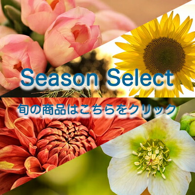 季節の商品