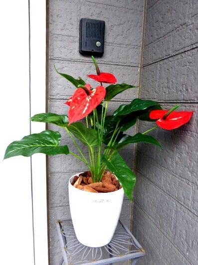 ●代引き不可【wgd-55】 送料無料 アンソリューム 人工観葉植物 造花 91500