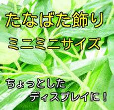 売り切れ御免の超特価商品!SALE!!