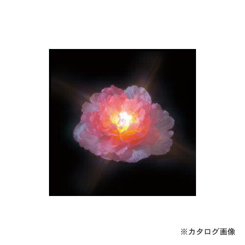STM-W01P