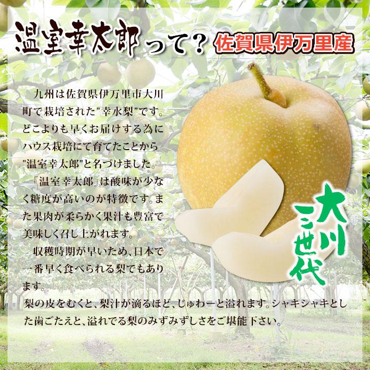 大川三世代温室幸太郎3kg