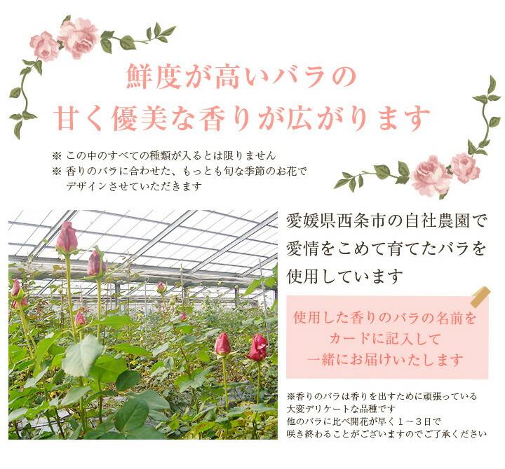 鮮度が高いバラの甘く優実な香りが広がります