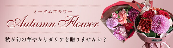 オータムフラワー 秋が旬の華やかなダリアを贈りませんか?