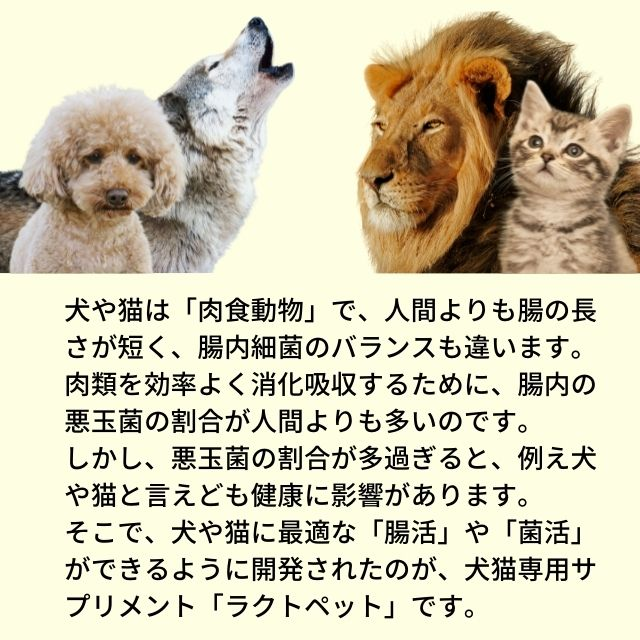 犬や猫は、肉食動物です。