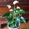 インテリアグリーン・観葉植物