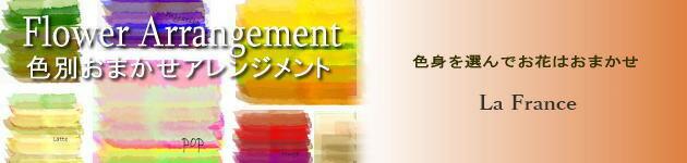 色別おまかせアレンジメント【カラーセレクト】