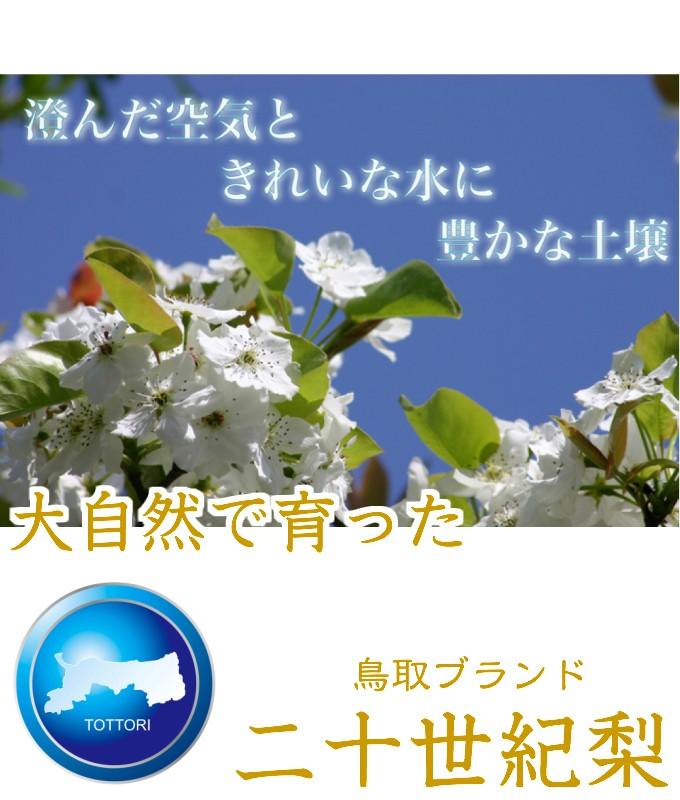 鳥取県 20世紀梨