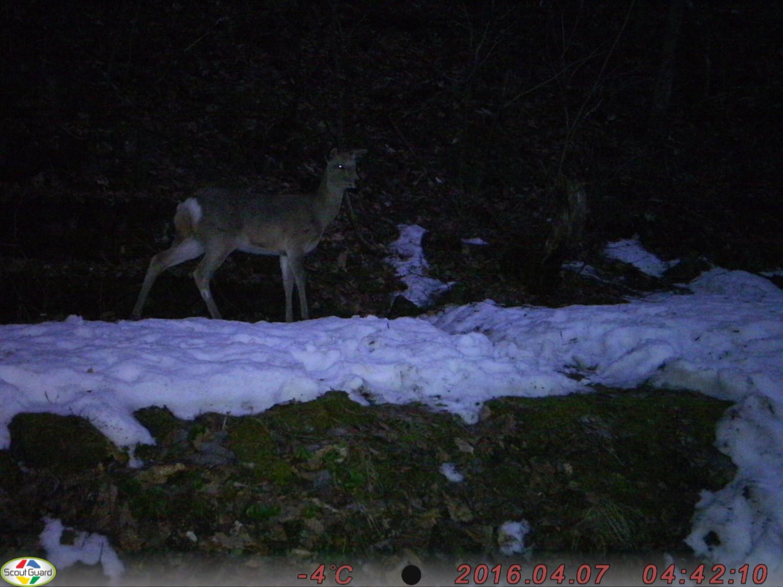 野生動物撮影カメラ