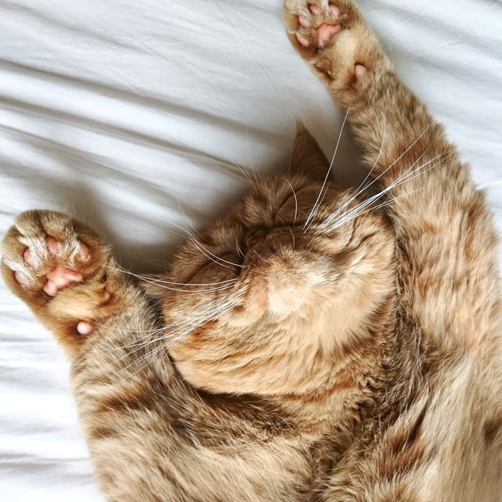 REDECKER レデッカー キャットブラシ 猫用 はぐり