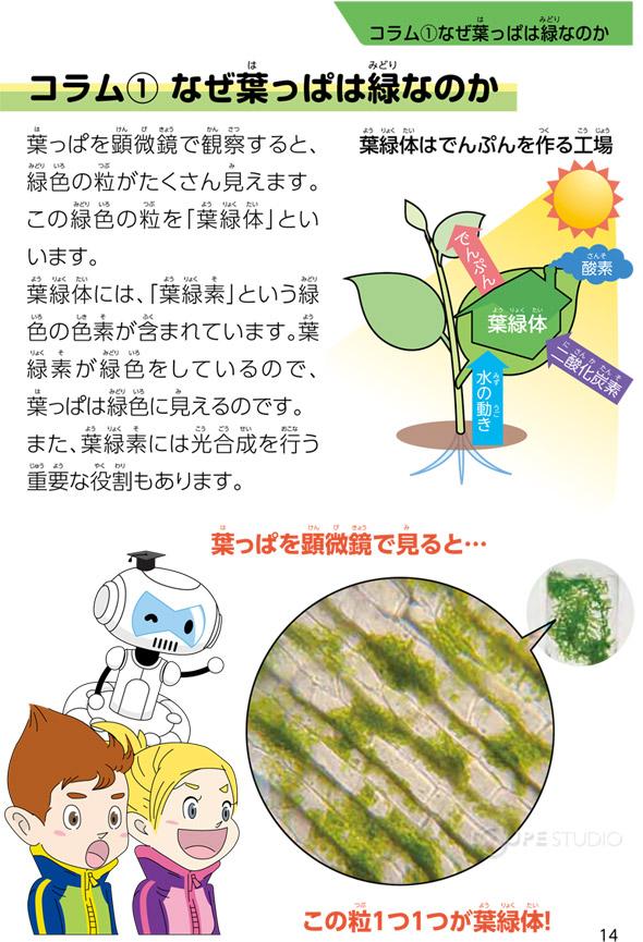 夏休み 夏休み 自由研究 小学生 理科 : ... 理科 科学 小学生 学習 夏休み