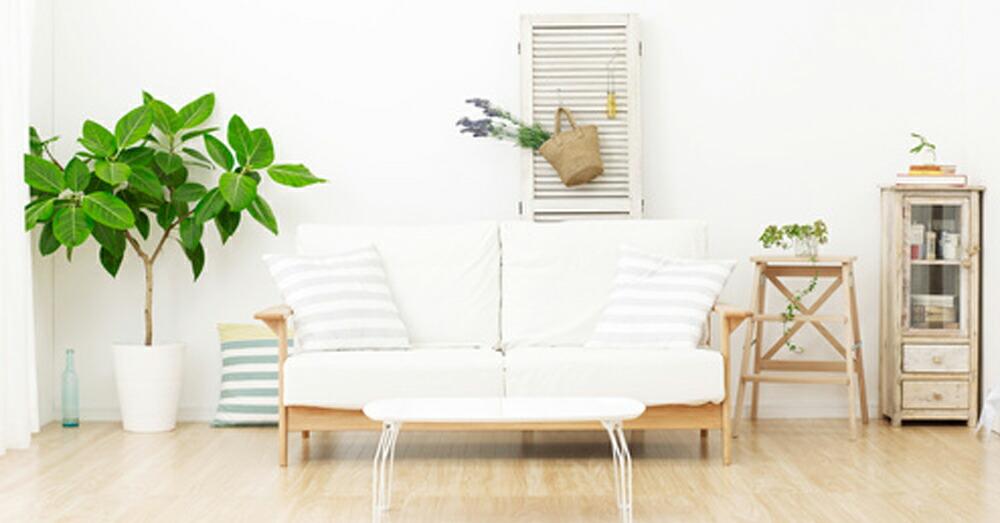 4.植物による浄化方法