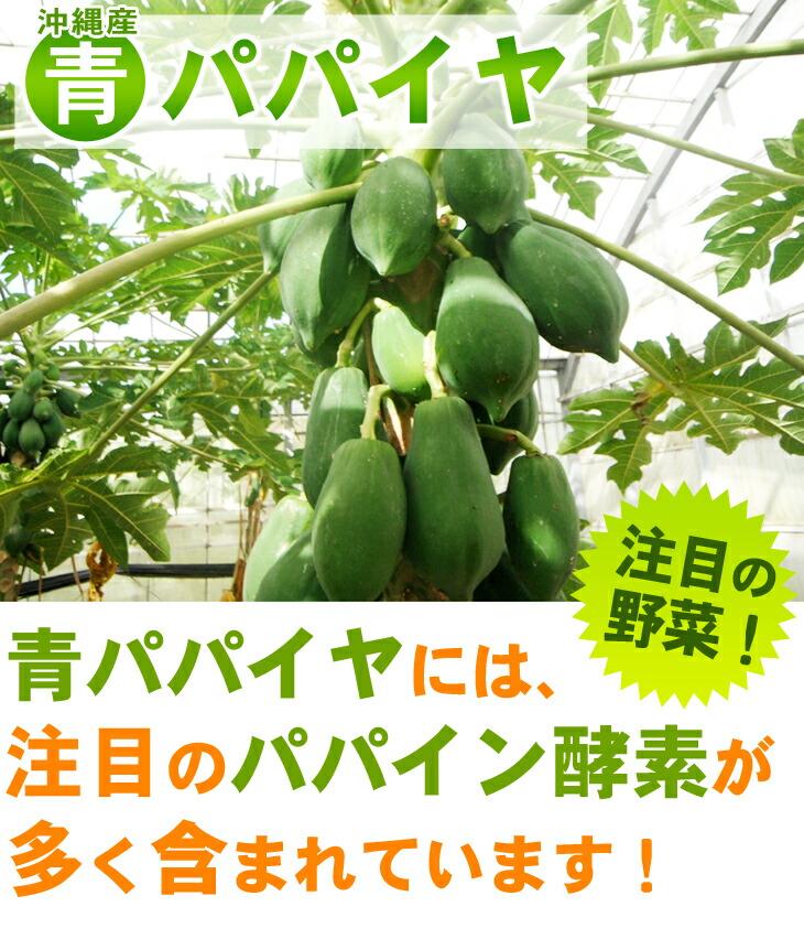 パパイン酵素が注目の沖縄産青パパイヤ(野菜)