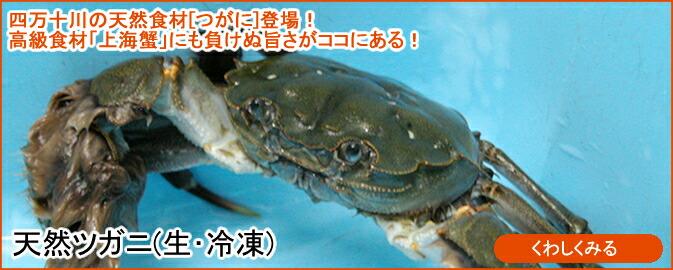 天然ツガニ(生・冷凍)
