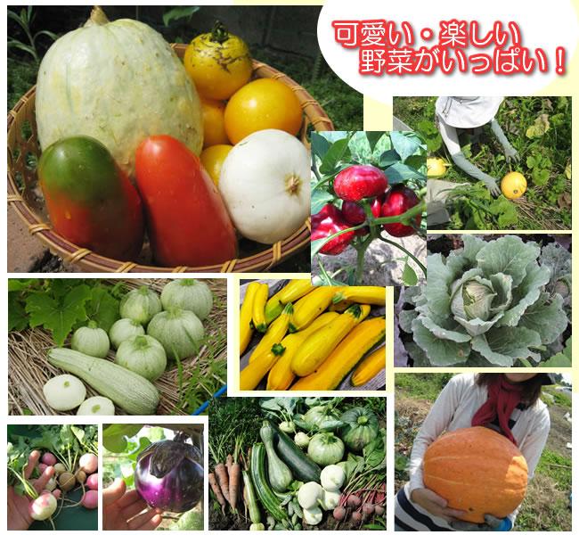 可愛い楽しい野菜がいっぱい!Franchiイタリア野菜の種