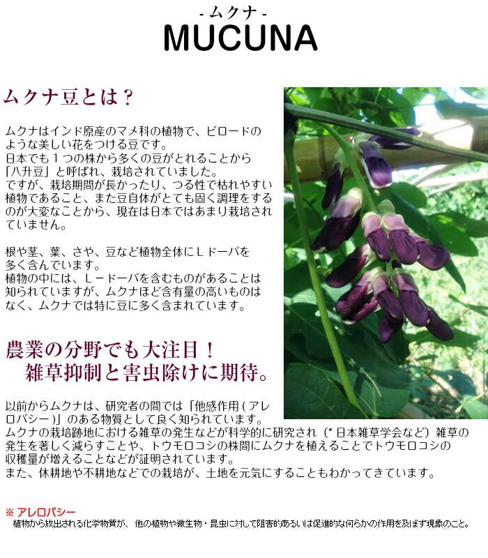 ムクナ豆について ムクナはL-ドーパを多く含んだ植物です。